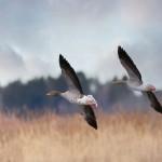 2 Fåglar