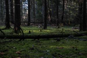 Fiby urskog 2 för webb