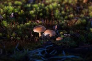 fotoutflykt-hallskogsbrannan-30-okt-svamp-for-webb